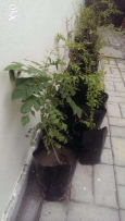 Today's Offer!!! Organic plants combo