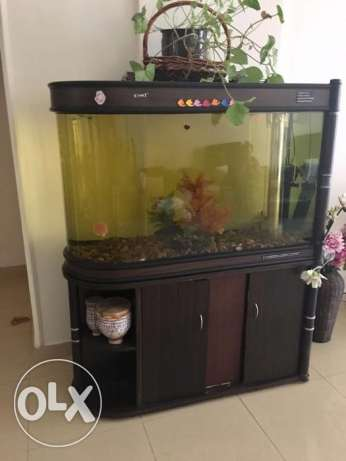 Aquarium (Fish Tank) for Sale