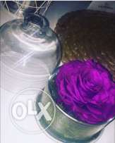 Preserved flowers for sell ورود الخالده