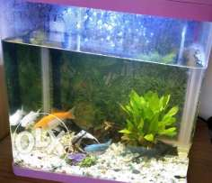 Aquarium frEsh water clean tank used for two months only