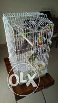 Two bright-green small parrots + cage