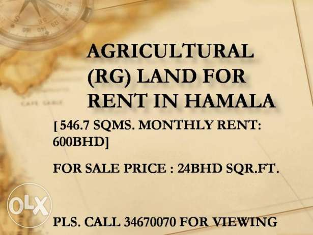 RG Land for rent in Hamala