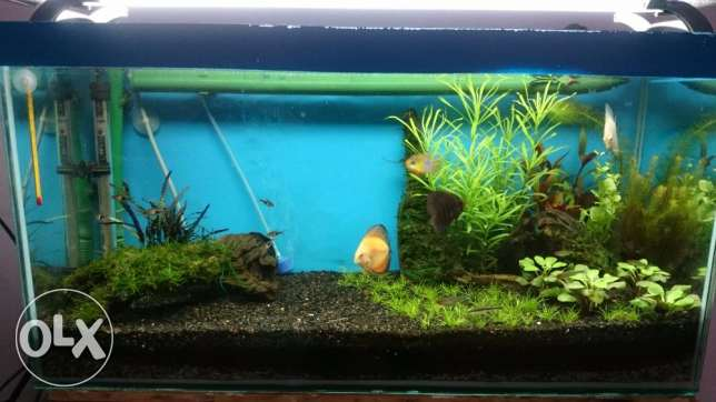 Planted Aquarium for Urgent Sale