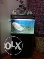 Big fish tank with beautiful fish..