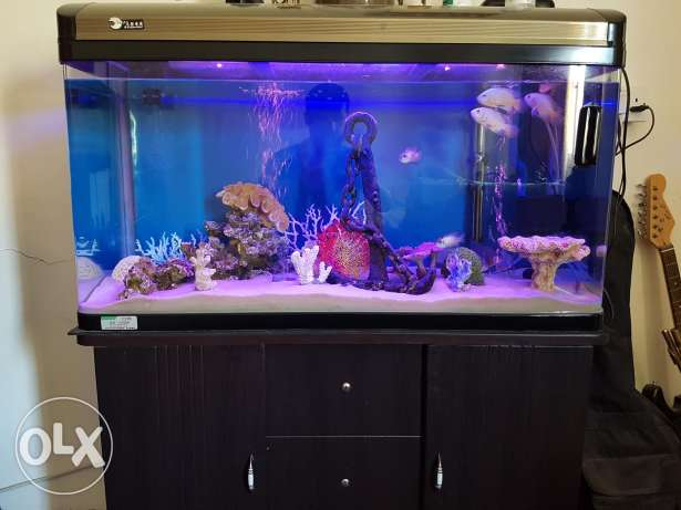 Aquarium + fish + ornaments + equipment + food