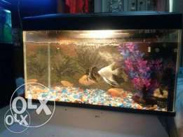 fish tank + fishes + accessories for sales BD : 30/- ( Negotiable )