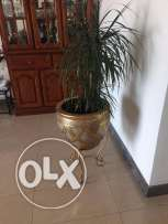 Turkish Carpet and Indoor Plants in good condition for sale