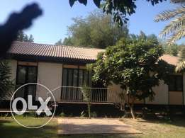 Three bedroom villas in beautiful green compound rent 600