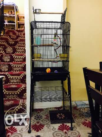 New Cage with toys and stand