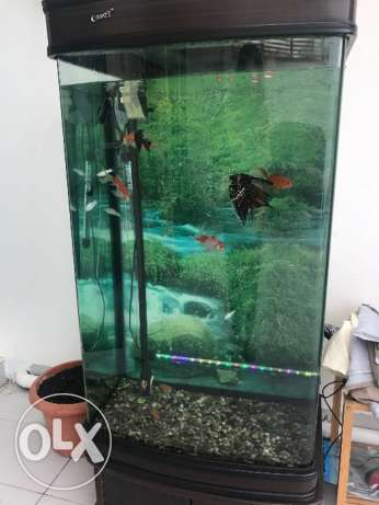 Brand New Aquarium for sale