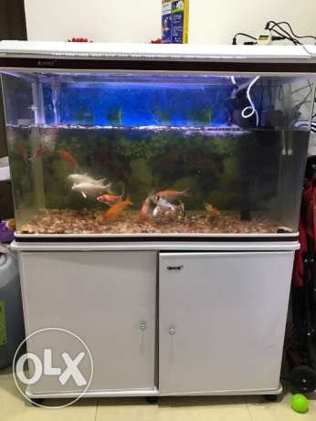 Big Aquarium with cabinets