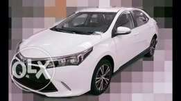 toyota corolla for sale Xsport