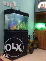Two nos fish tank and accessories + fish's for sale