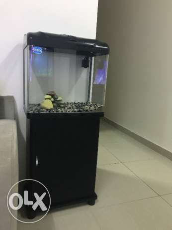 Fish Tank with complete setup